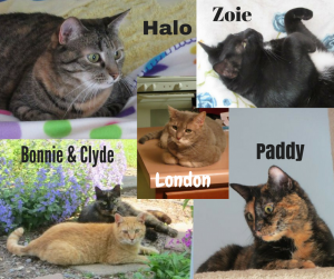 cat-collage-for-bio-page
